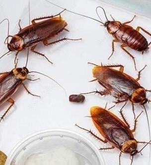 提供上海灭蟑螂多少钱东诚供
